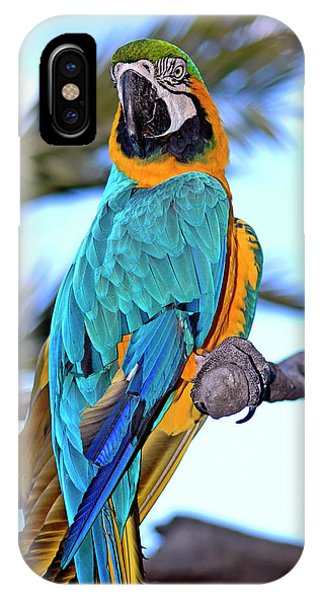 Macaw iPhone Case - Pretty Parrot by Carolyn Marshall