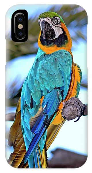 Pretty Parrot IPhone Case