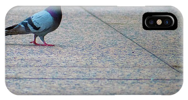 Pretty Pigeon Posing On A Sidwalk IPhone Case