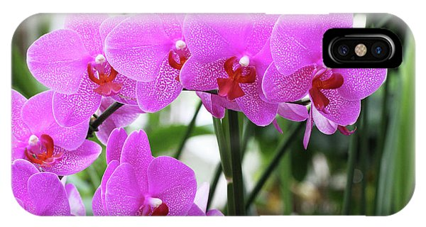 Pretty Pink Phalaenopsis Orchids #2 IPhone Case