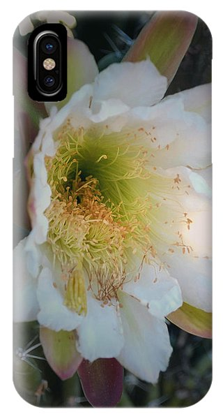 IPhone Case featuring the photograph Prickley Pear Cactus by Kate Word