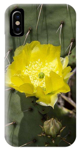 Prickly Pear Cactus Blossom - Opuntia Littoralis IPhone Case
