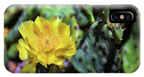 Prickly Pear Cactus Flower On Assateague Island IPhone Case