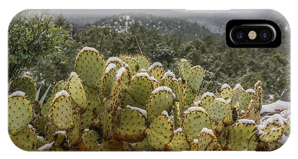 Cactus Country IPhone Case