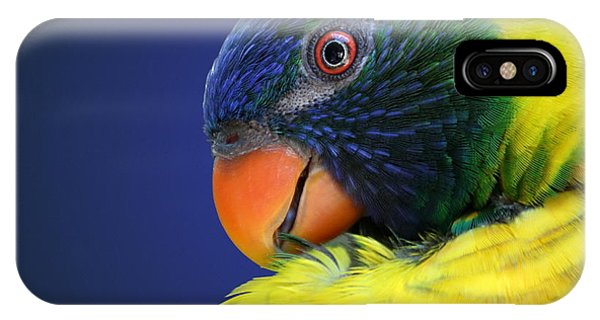 Profile Of A Lorikeet IPhone Case