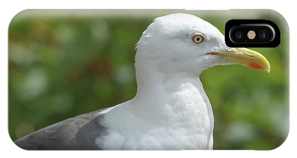 IPhone Case featuring the photograph Profile Of Adult Seagull by Jacek Wojnarowski