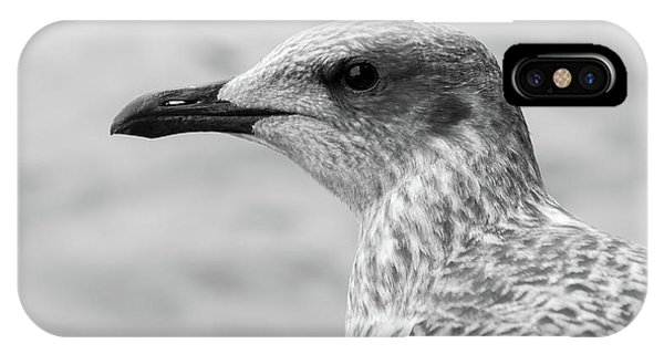 IPhone Case featuring the photograph Profile Of Juvenile Seagull Bw by Jacek Wojnarowski