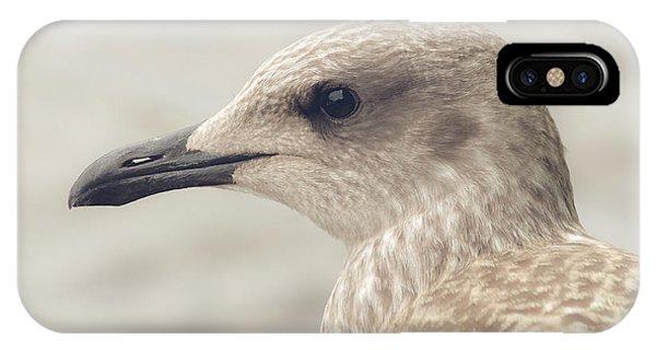 IPhone Case featuring the photograph Profile Of Juvenile Seagull by Jacek Wojnarowski