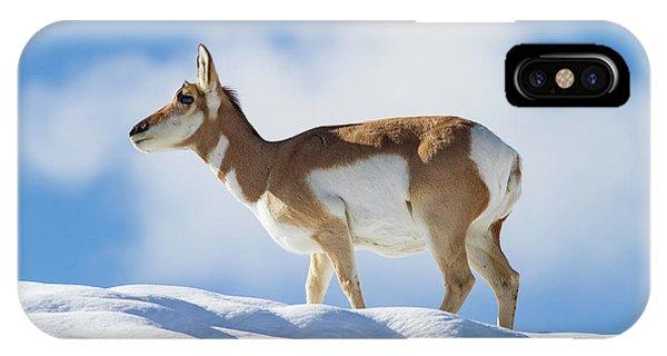 Pronghorn Doe On Snowy Ridge IPhone Case
