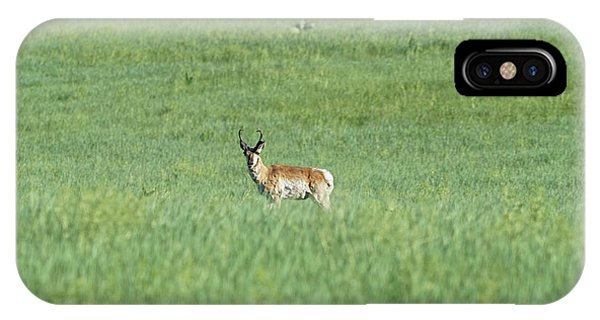 Pronghorn In A Sea Of Green IPhone Case