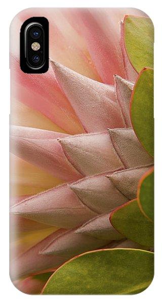 Protea Blossom IPhone Case