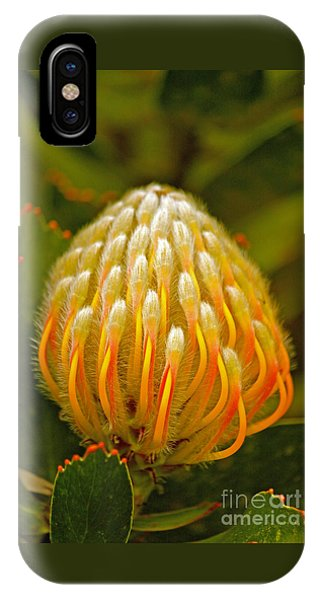 Proteas Ready To Blossom  IPhone Case