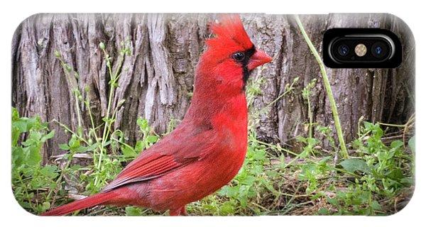 Proud Cardinal IPhone Case