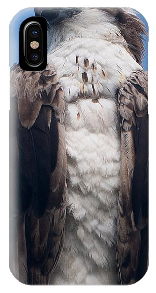 Proud Hawk IPhone Case