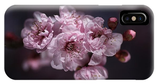 Prunus A Pink Spring IPhone Case