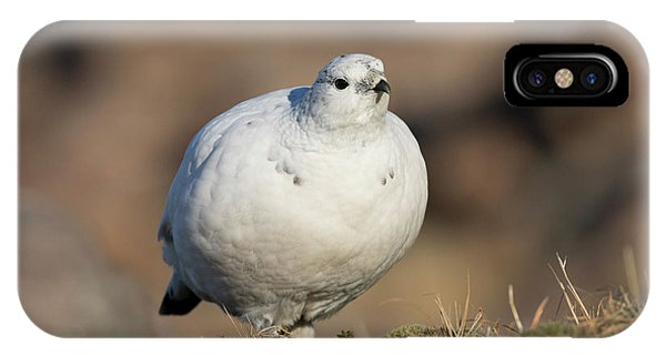 Ptarmigan Going For A Stroll IPhone Case