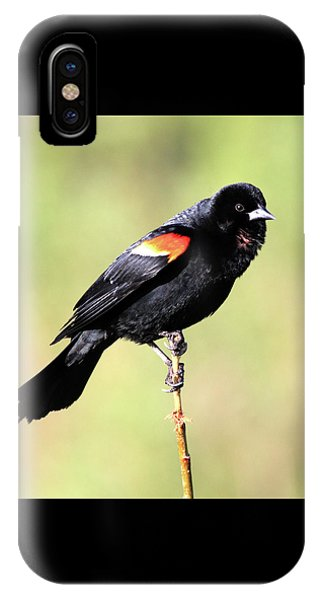 IPhone Case featuring the photograph Puffed Throat by Shane Bechler