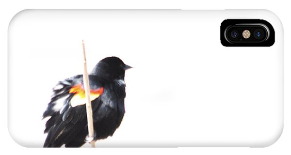 Puffed Up Red-winged Blackbird IPhone Case