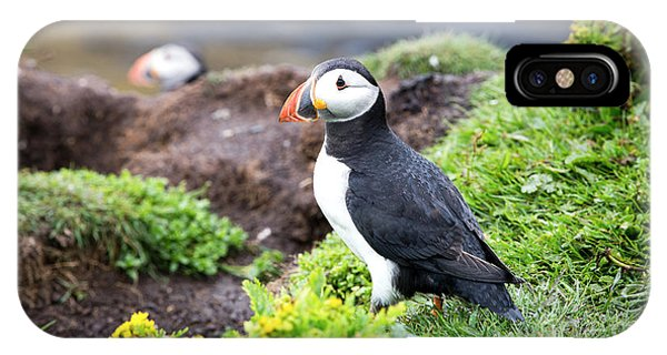 Northern Scotland iPhone Case - Puffin  by Jane Rix