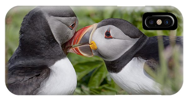 Puffin Love IPhone Case