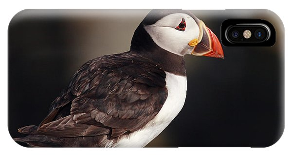 Puffin On Rock IPhone Case