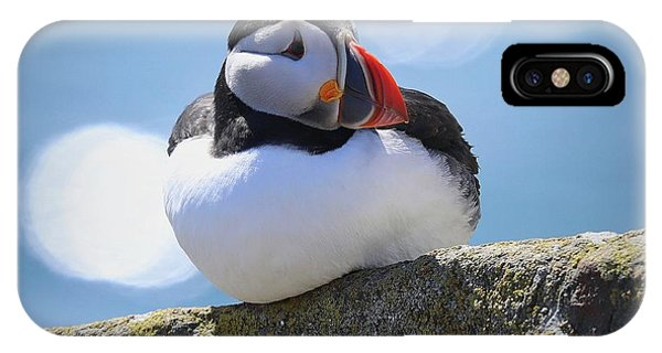 Puffin Time IPhone Case