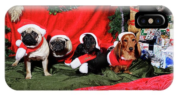 Pugs And Dachshounds Dressed As Father Christmas IPhone Case