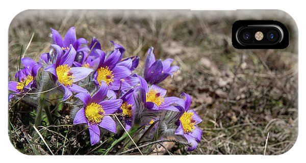IPhone Case featuring the photograph Pulsatilla by Andreas Levi