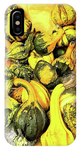 Pumpkin Family IPhone Case