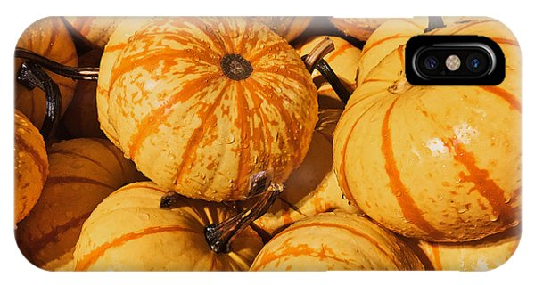 Pumpkin Harvest IPhone Case