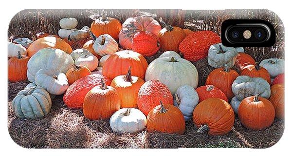 Pumpkin Patch At Cheekwood Gardens IPhone Case