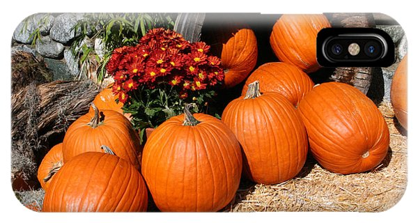 Pumpkins- Photograph By Linda Woods IPhone Case
