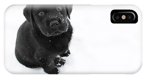 Great White Shark iPhone Case - Puppy In The Snow by Larry Marshall