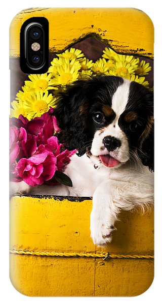 King Charles iPhone Case - Puppy In Yellow Bucket  by Garry Gay