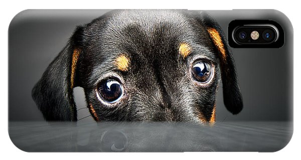 Small Dog iPhone Case - Puppy Longing For A Treat by Johan Swanepoel