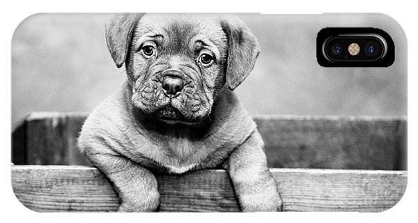 Puppy - Monochrome 3 IPhone Case