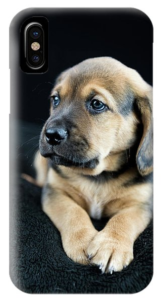 Puppy Portrait IPhone Case