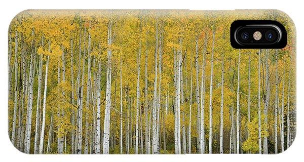 Purgatory Aspen Grove IPhone Case