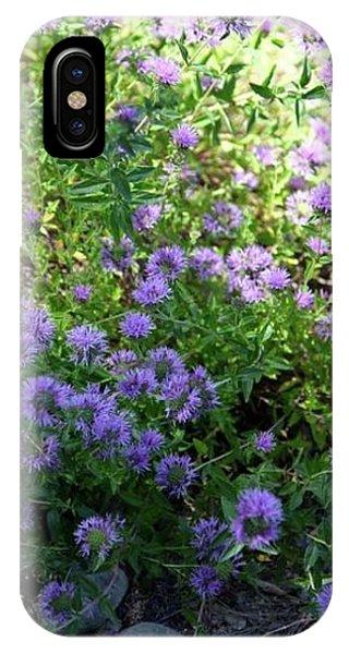 Purple Bachelor Button Flower IPhone Case