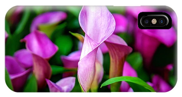 Fall Flowers iPhone Case - Purple Calla Lilies by Az Jackson