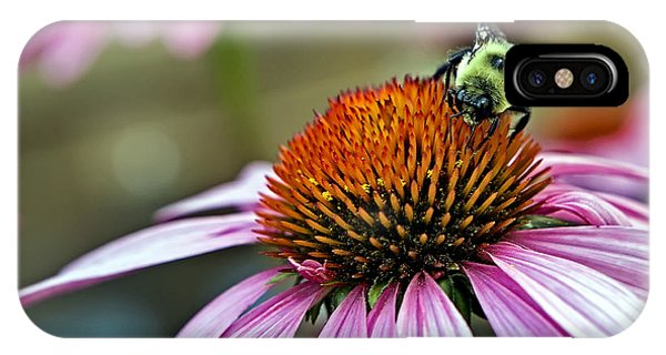 Purple Cone Flower And Bee IPhone Case