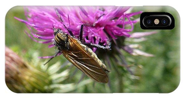 Purple Dandelions 1 IPhone Case