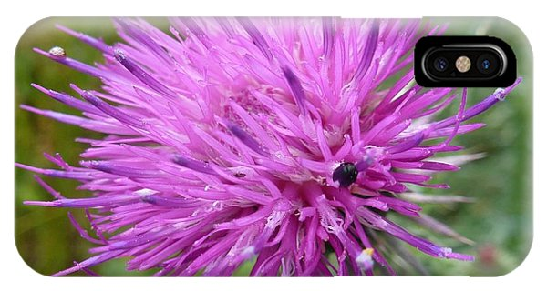 Purple Dandelions 2 IPhone Case