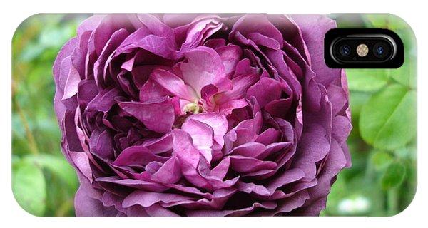 Purple English Rose IPhone Case