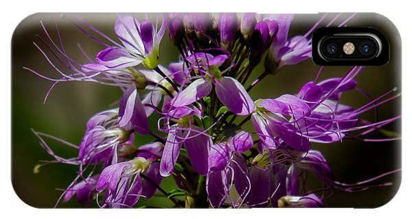 Purple Flower 1 IPhone Case