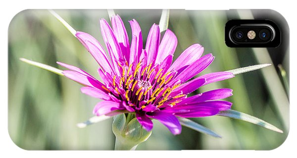 Purple Flower 3354 IPhone Case