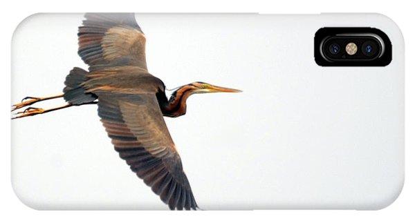 Purple Heron In Flight IPhone Case