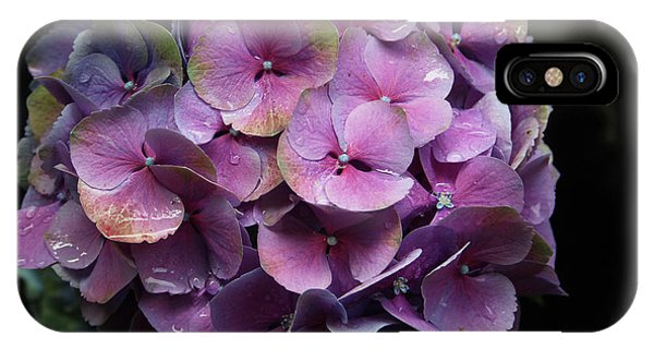 Garden Wall iPhone Case - Purple Hydrangea- By Linda Woods by Linda Woods