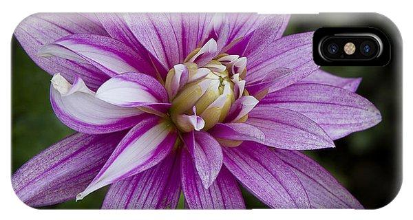 Purple Pink Dahlia IPhone Case