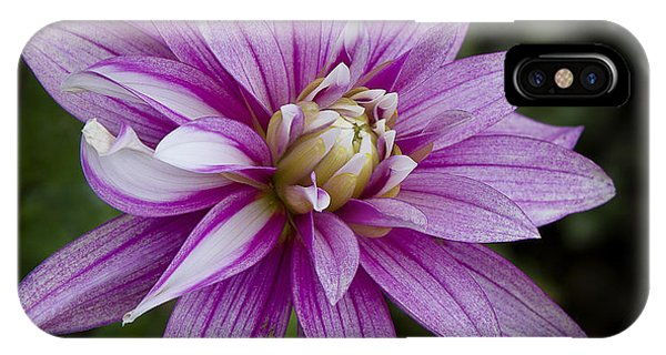 Purple Pink Dahlia IPhone Case